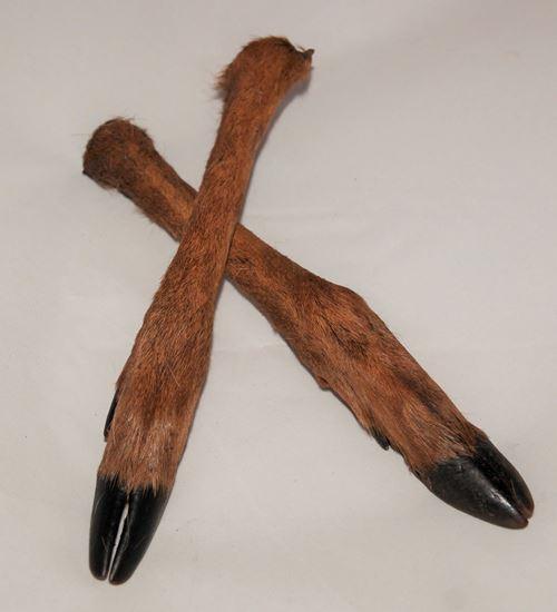 Billede af Rådyr underben med pels  2 stk.