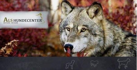 Billede til varegruppe Hundetræning