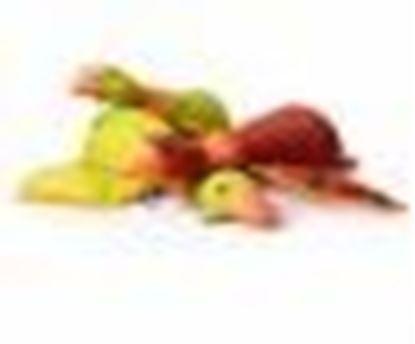 Billede af And med piv 40 cm rød
